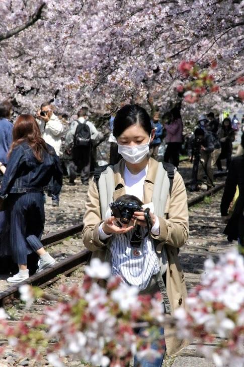 Kioto, Sakura