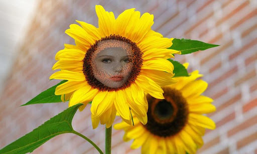 玩免費攝影APP|下載Sunflower Photo Face effects app不用錢|硬是要APP