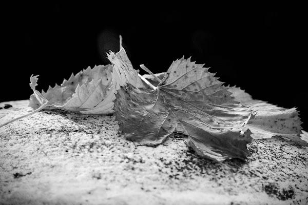 frunzele moarte di Bobp