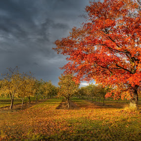 After the Storm by James Rudick - Landscapes Prairies, Meadows & Fields ( hdr,  )