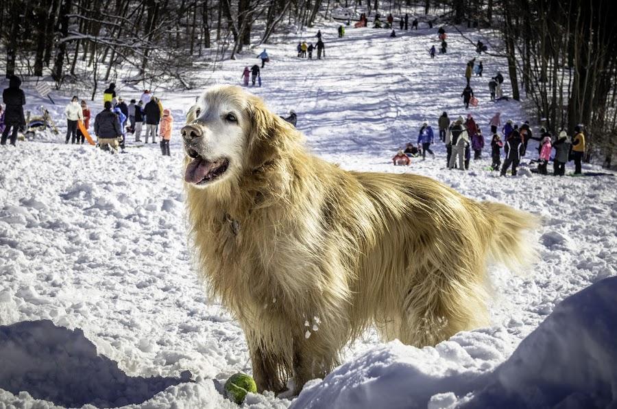 by Chatschik Bisdikian - Animals - Dogs Portraits