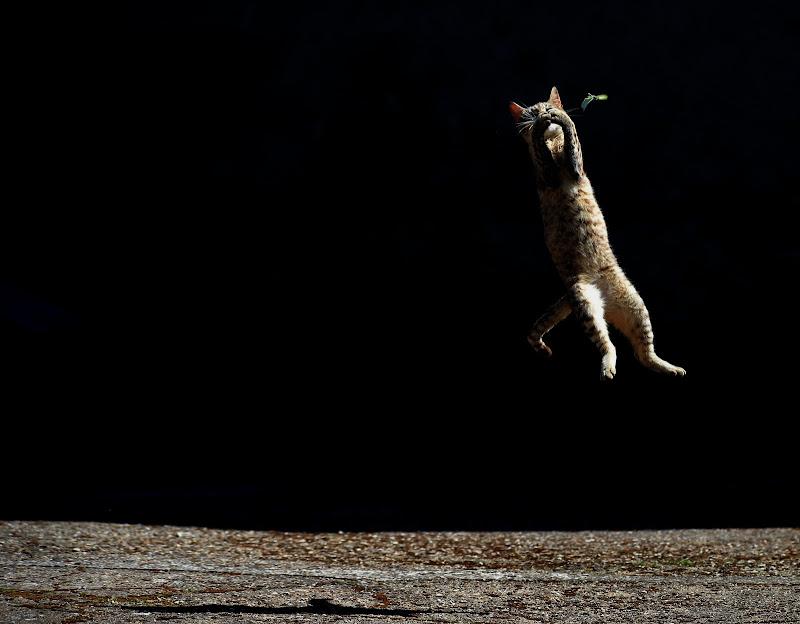 Jump di braxittu