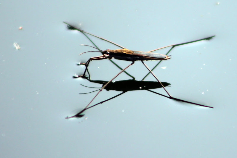 insetto di ando6523