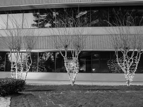 Photo: Day 349-Holiday Lights In Black And White