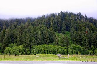 Photo: (Year 2) Day 360 - Mist in the Tree Tops on the Way in to Orick