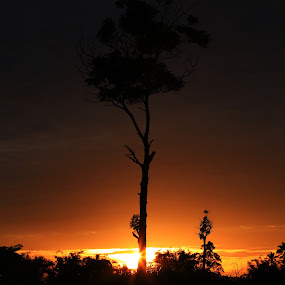 Sunset Tree by Adi Krishna - Landscapes Sunsets & Sunrises