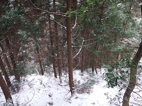 樹林帯に突入(幼木が多く)