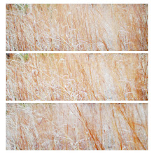 Photo: Grassland Triptych