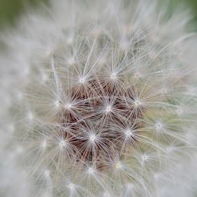 Flower by Raymond Umlas - Nature Up Close Flowers - 2011-2013 ( weed; flower; allergen;backyard;nature )