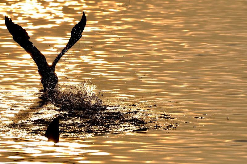 corri cormorano corri di flori
