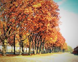autunno a Stupinigi