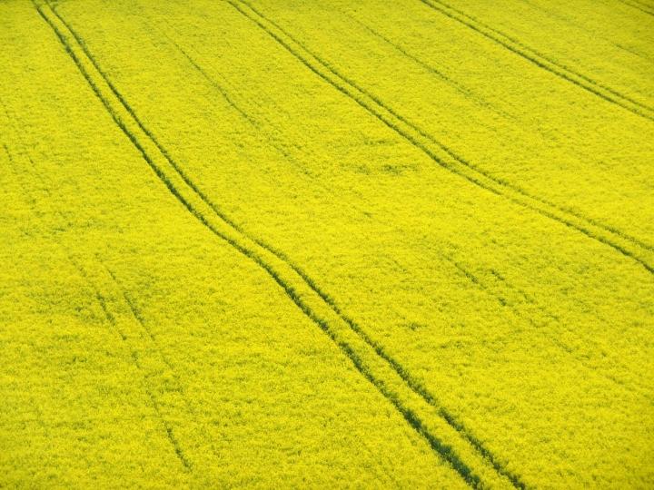 Nel giallo... di JoelleG