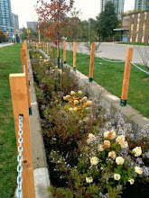 Photo: At Elm Drive School, we upgraded these planting, working with Credit Valley Conservation and the City of Mississauga, we upgrades these #rainscape plantings to make them more ornamental and public pleasing. It was a big hit! Great in Winter and all season.