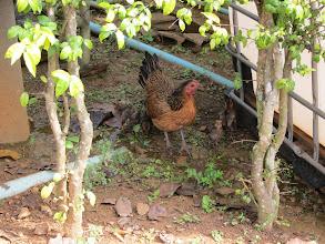 Photo: Chicken family