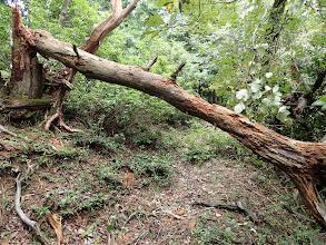 倒木を潜り右の尾根へ