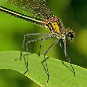 by Jiří Staško - Animals Insects & Spiders