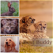Best Buddy – Calming Music to Relax and Calm Down Your Dog, Pet Relaxation, Stress Relief, Anxiety Medication, Sleep Aids, Music Therapy for Dogs, Comfort and Happiness with Nature Sounds