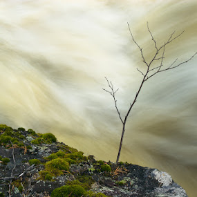 Small Tree by Waterfall by Artem Sapegin - Landscapes Waterscapes