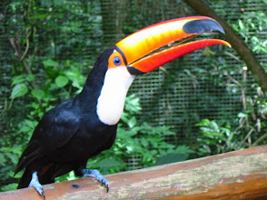 Photo: This friendly toucan flew right up to us
