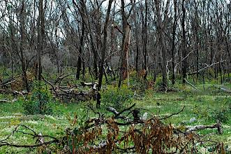 Photo: Caladenia habitat  Mininup Nature Preserve, Shire of Boyup Brook