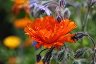 Photo: Satte Farben im Bauerngarten