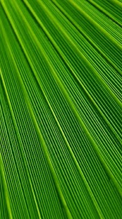 Moto G4 Play HD Wallpapers - náhled