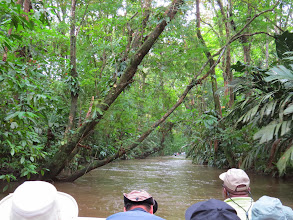 Photo: A boat trip through the mangrove added a number of birds, monkeys and reptiles to our totals.