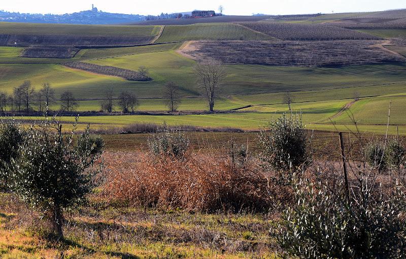 vignale monferrato di nicoletta lindor