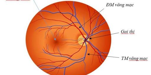 Hình ảnh động mạch võng mạc