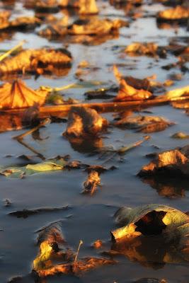 La vita d'autunno di Bellaventu