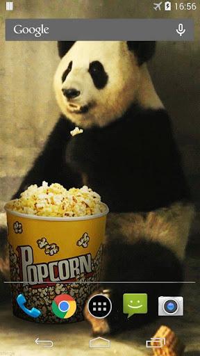 かわいい怠惰なパンダ