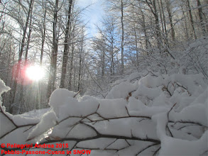 Photo: IMG_9913 carichi di neve