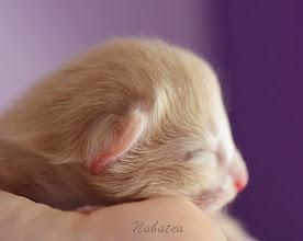 Photo: Xylia - 7 days old