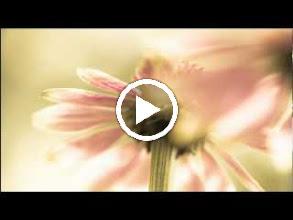 Video: A. Vivaldi  Armida (RV 699-A) - II XVI Aria [Califfo]  Chi alla colpa fà tragitto (strings version) -