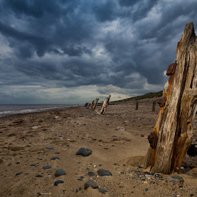 Beeches by Andrew Holland - Landscapes Beaches