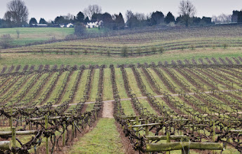 Photo: The winter vineyard. For #leadinglinesmonday curated by +Pam Chalkley+Michael B. Stuart+Elle Rogersand +David Murphy