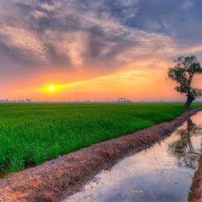 The Eye Of The Sunrise by SyaFiq Sha'Rani - Landscapes Sunsets & Sunrises ( hdr, tree, cloud, tranquility, sunrise, sun, eye )