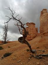 Photo: Incredible twisted tree