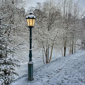 Winter Evening by Dmitriev Dmitry - Landscapes Travel ( lights, winter, tree, park, snow, light )