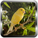 Canary Bird Sound Ringtones icon