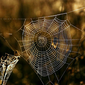 by Katka Kozáková - Nature Up Close Webs ( web,  )