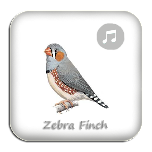 Download Kicau Zebra Finch Gacor Pikat Apk Latest Version For Android - Perkawinan Zebra, Chimera Dan 18 Hewan Kawin Silang Beda Spesies Yang Berhasil Halaman 2