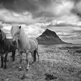 Amazing Iceland by Tim Vollmer - Landscapes Travel ( clouds, water, kirkjufell, iceland, mountain, horses, ocean, pwcbwlandscapes, www.timvollmer.de )