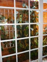 Photo: /Lá fora plantas trepadeiras se enroscam nas ferragens. http://celiamartins.blogspot.com