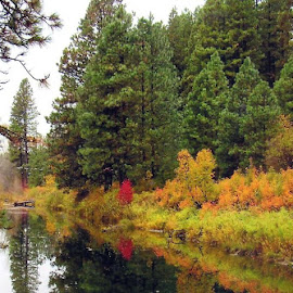 RIVER STILL by Cynthia Dodd - Novices Only Landscapes ( fall colors, fall, river, water, landscape, colors,  )