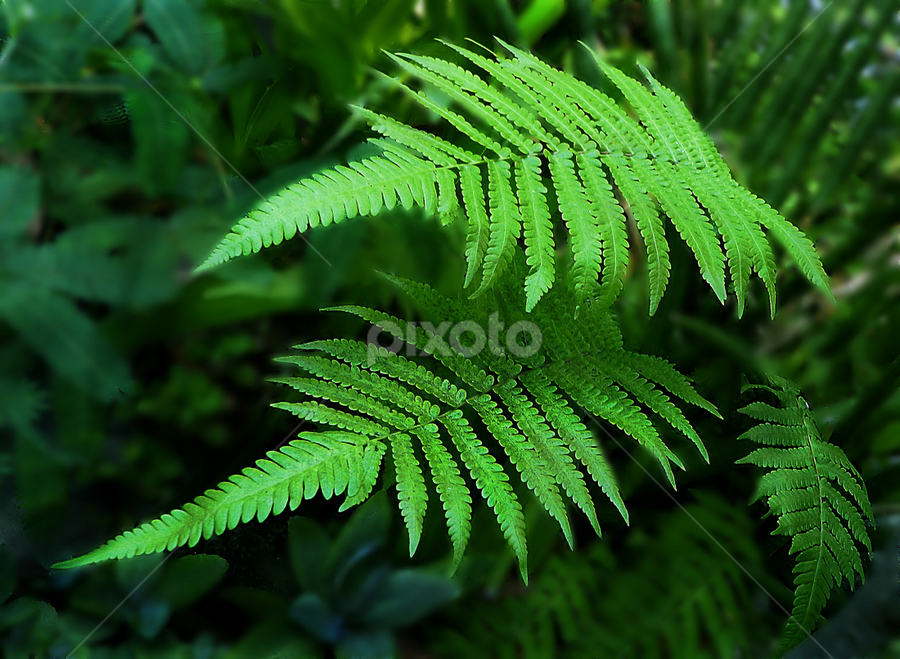 Furn Leaves by Sutanu Mukherjee - Nature Up Close Leaves & Grasses ( bouquet, with, moisture, beautiful, furn leaves, flower,  )