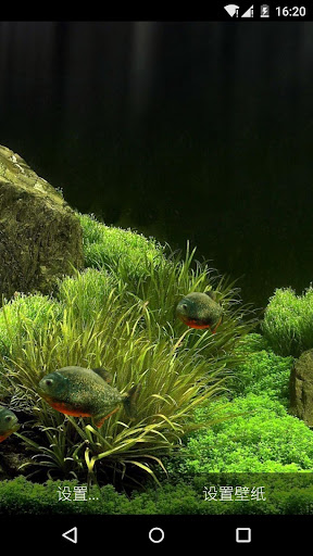 3D食人鱼水族馆动态壁纸|玩個人化App免費|玩APPs
