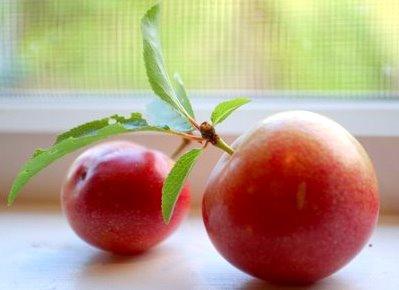 Photo: www.patsiri.com