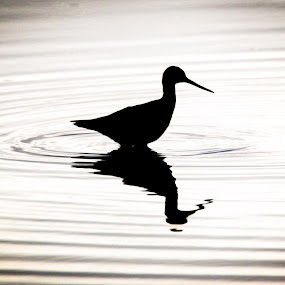 Peaceful Solitare Energy by Beth Phifer - Animals Birds ( water, bird, nature, waves, circle )