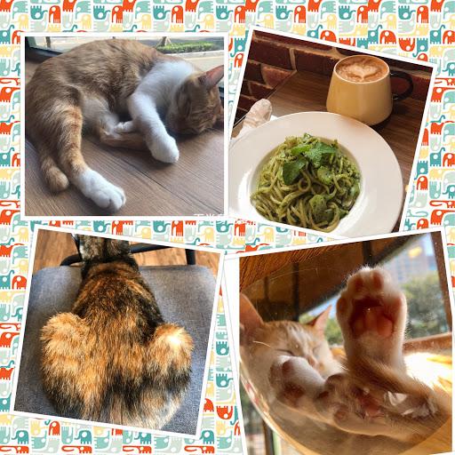完全以貓為主的餐廳,客人只是配角,每隻貓主人都很友善,下半身都可以那麼自然的形成一個愛心(如左下圖),裡面大約6-7隻貓,因為這裏就是他們的家,所以可能隨時跳到你的桌上,不客氣的就踩下你電腦上的del